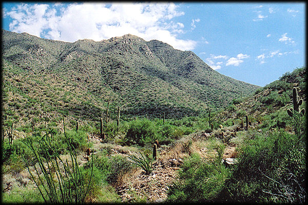 Bell Canyon, from near the end of Bell Road, in the McDowell Sonoran Conservancy, in Scottsdale, Arizona.