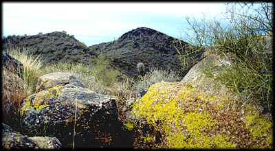 Yellow Paint Lichen and Desert Varnish cover metamorphic rocks on Black Mountain, near Carefree, Arizona.